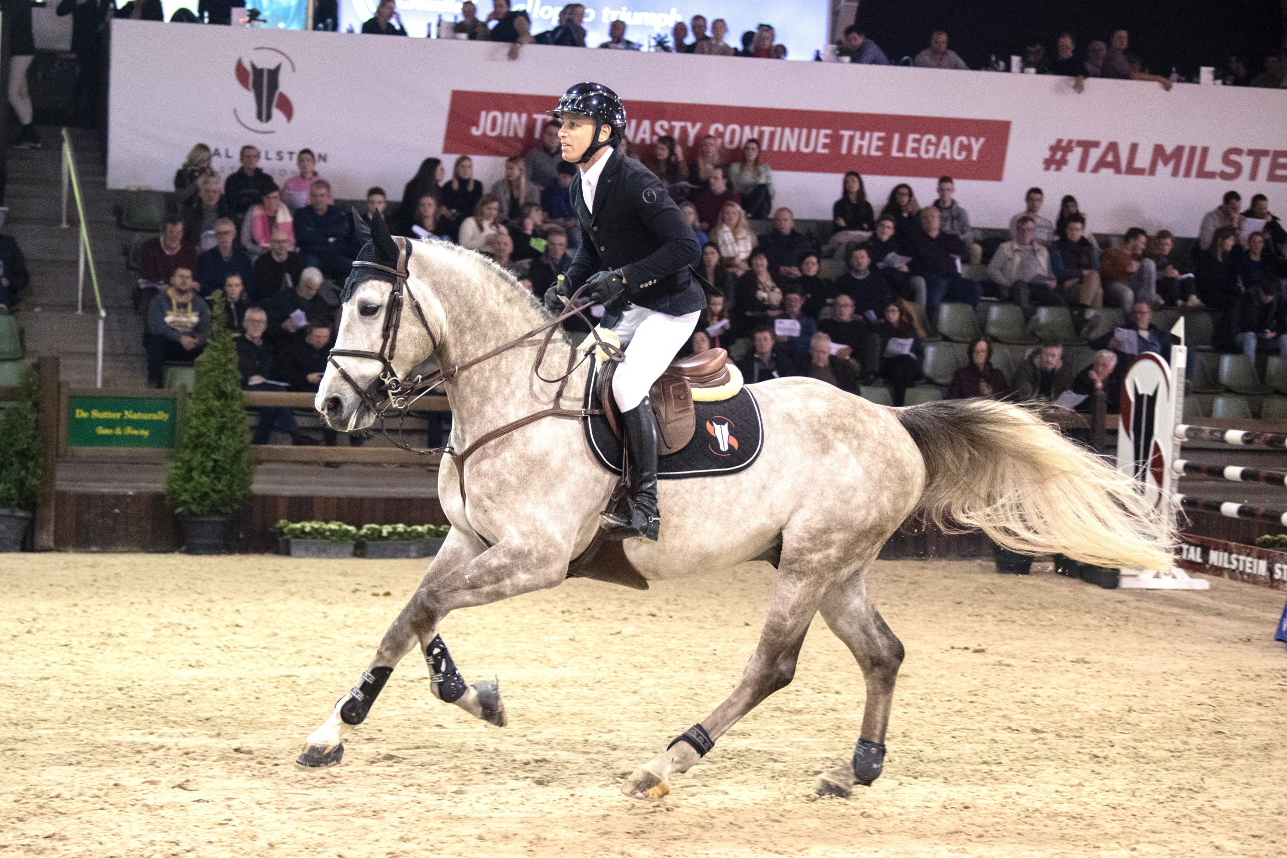 HAMILTON shines at PAVO Stallion Competition!
